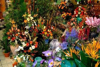 Votre fleuriste lons le saunier livraison de fleurs for Fleuriste proche