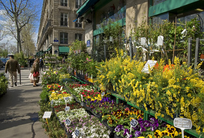 Votre fleuriste loupian livraison de fleurs loupian for Fleuriste proche