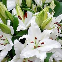 Fleurs de lys blanches - Lys blanc signification ...