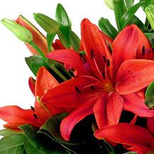 Fleur De Lys Rouge Signification Depu Vi