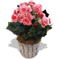 Livraison de plantes vertes et fleuries 123fleurs - Plantes fleuries en pot ...