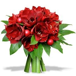 Bouquet de no l livraison fleurs de no l 123fleurs for Fleurs amaryllis bouquet