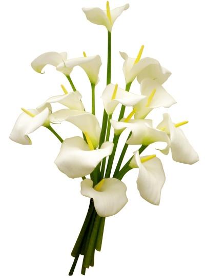 Les fleurs du fleuriste bouquet d 39 arums livraison en 4h for Fleuriste qui livre a domicile