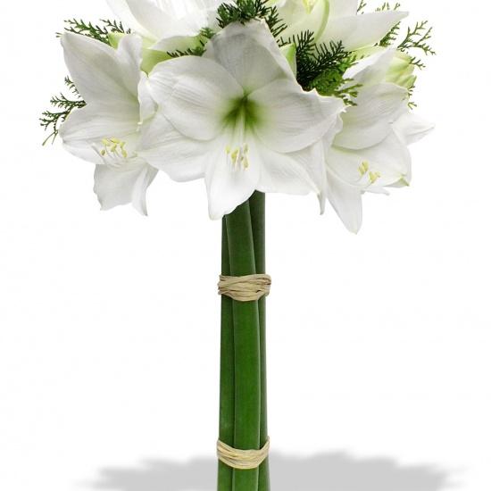 Bouquet emotion amaryllis for Amaryllis en bouquet