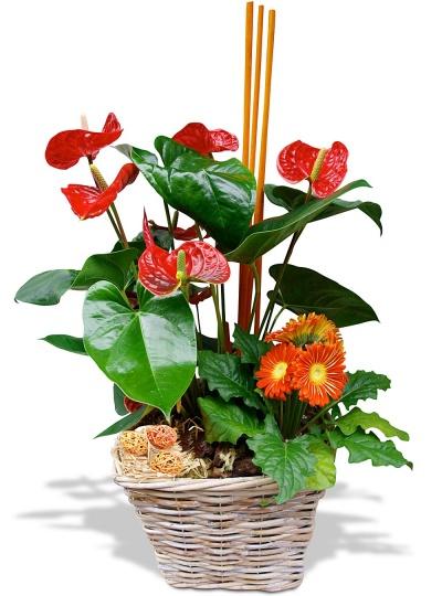 Composition fleurs plantes composition agrumes for Plante haute interieur