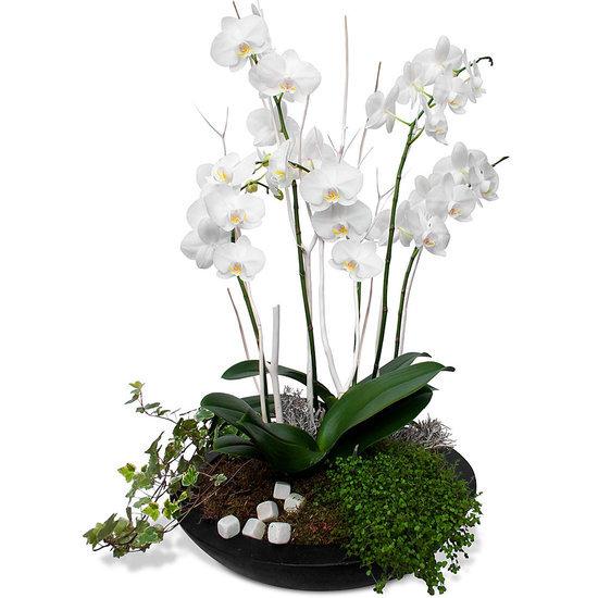 composition mariage orchid es lena livraison de fleurs. Black Bedroom Furniture Sets. Home Design Ideas