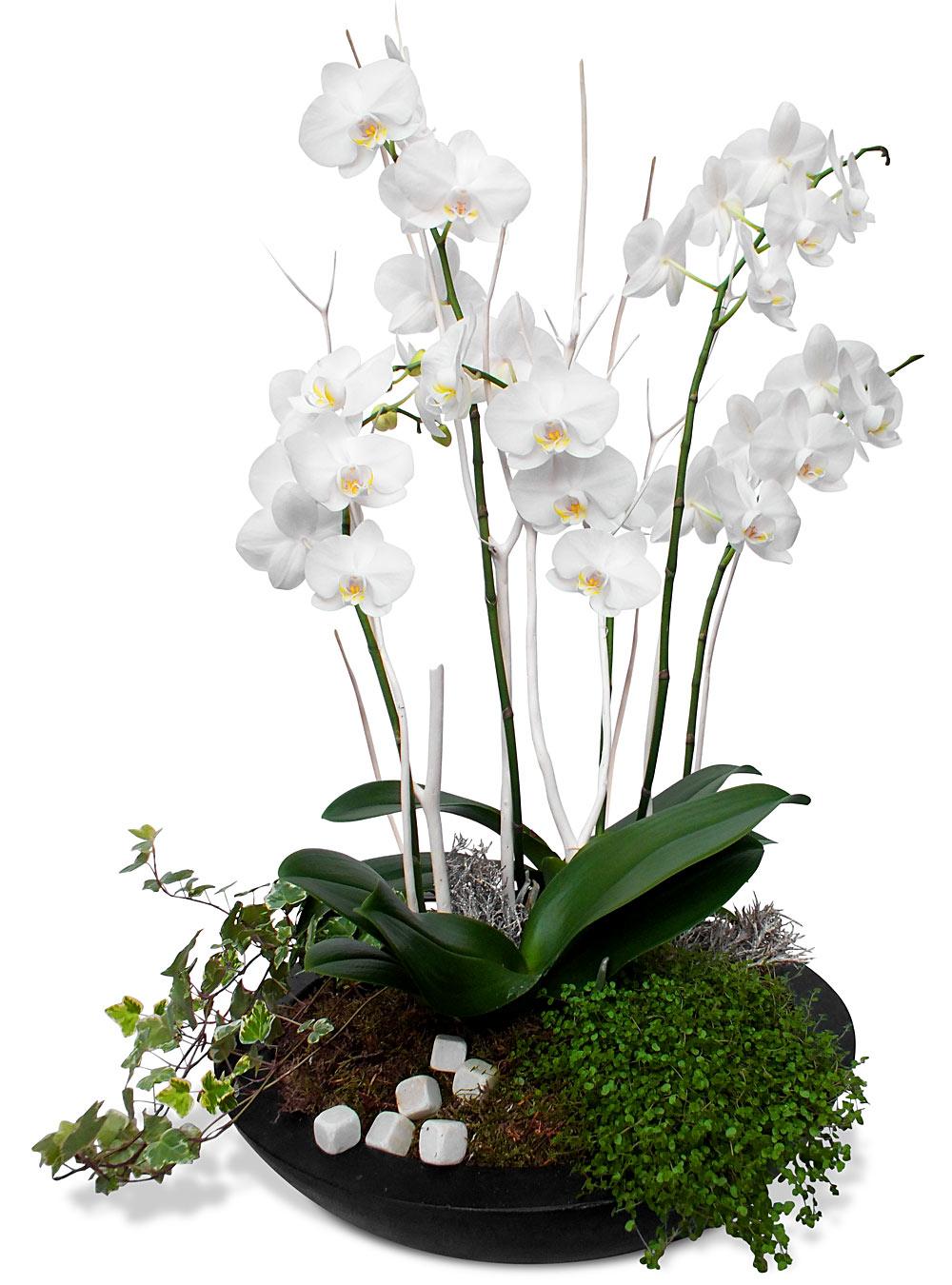 Livraison de fleurs en 4h les fleurs mariage composition for Site livraison fleurs
