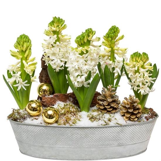 livraison de fleurs composition de jacinthes. Black Bedroom Furniture Sets. Home Design Ideas