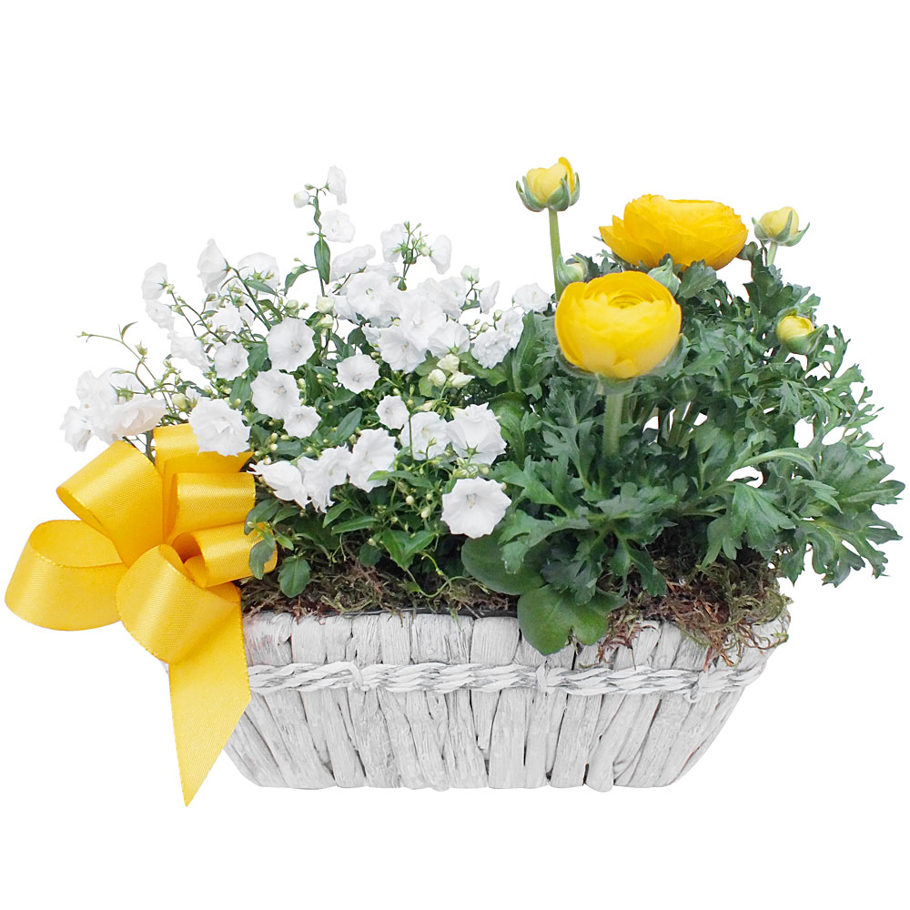 Composition fleurs plantes composition mignardise for Livraison de fleurs