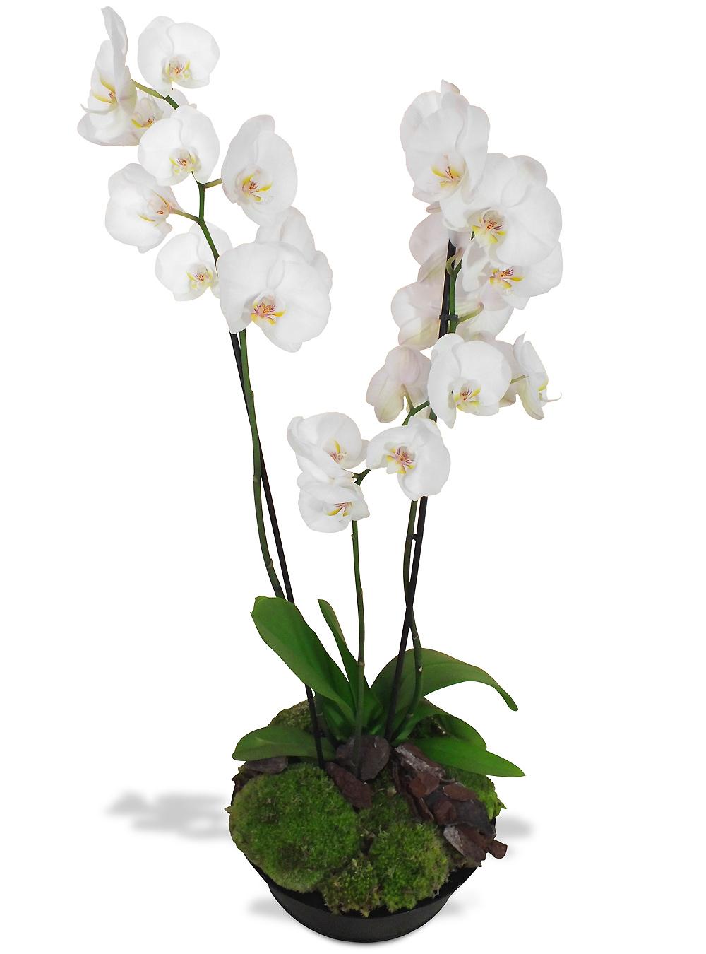 livraison de fleurs en 4h orchid es du fleuriste composition orchid es blanches. Black Bedroom Furniture Sets. Home Design Ideas