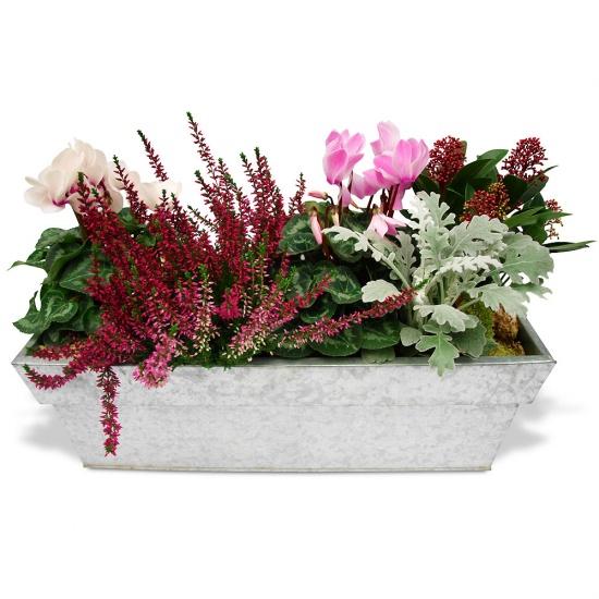 Composition paisible jardin for Plantes fleuries pour jardin