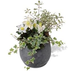 livraison de jolies plantes vertes et fleuries. Black Bedroom Furniture Sets. Home Design Ideas