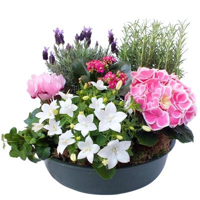 les fleurs deuil coupe de plantes alma livraison en 4h. Black Bedroom Furniture Sets. Home Design Ideas