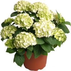 livraison de plantes vertes et fleuries 123fleurs. Black Bedroom Furniture Sets. Home Design Ideas