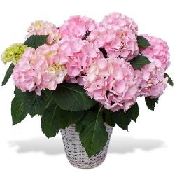 Livraison fleurs en 4h envoi de fleurs 7j 7 123fleurs for Envoi de fleurs par correspondance