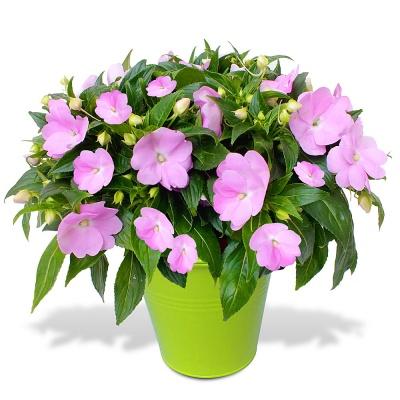 Livraison de fleurs en 4h plantes vertes fleurs for Plantes vertes a fleurs