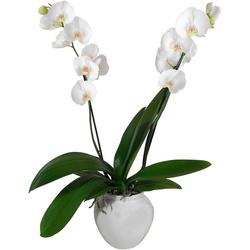 Livraison D Orchidees Blanches Et Autres Coloris En 4h 123fleurs