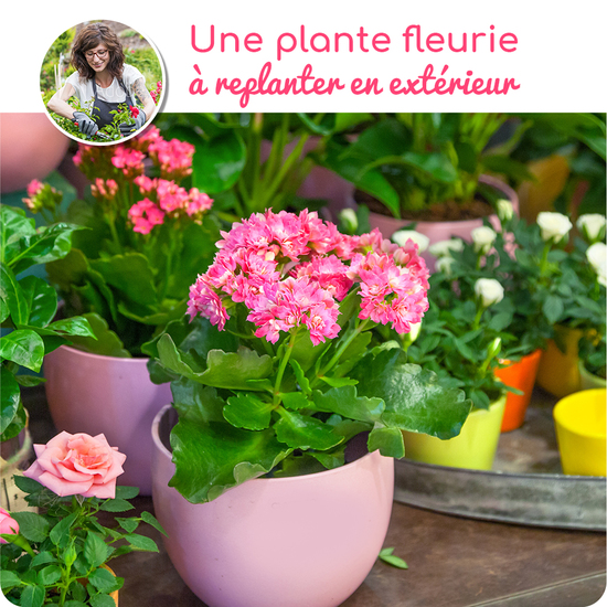 Plante fleurie à replanter