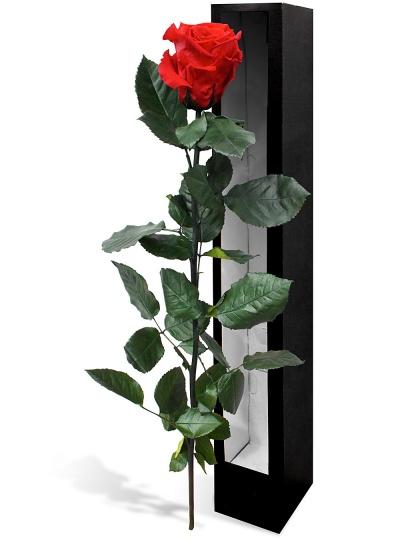 Roses talisman en promo rose rouge en bo te cadeau for Bouquet de fleurs dans une boite