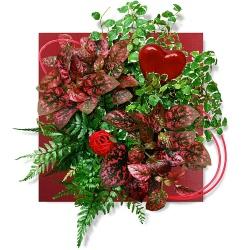 Tableau végétal Tableau Amour passion - 123fleurs