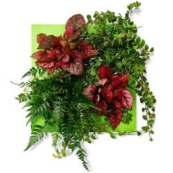 Tableau végétal Tableau de Peps - 123fleurs