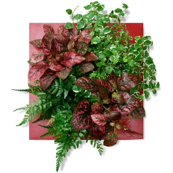 Tableau végétal Tableau Rouge plaisir - 123fleurs