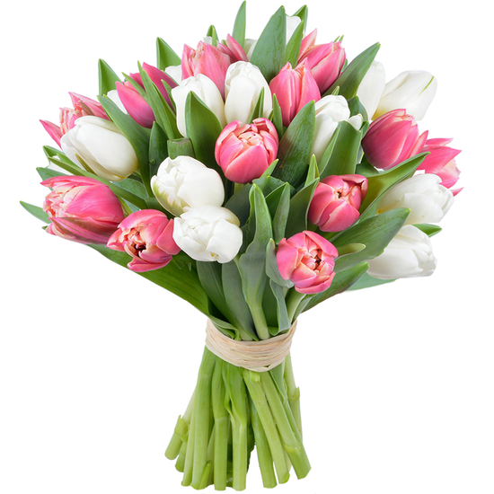 Tulipes roses et blanches